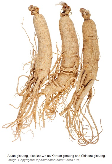 Asian ginseng Adaptogens 2 Canadian Academy of Sports Nutrition caasn