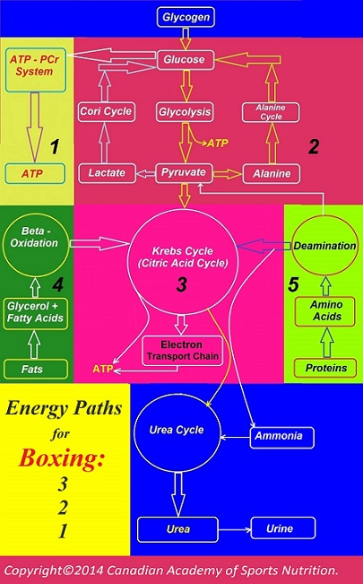 Boxing 2 Canadian Academy of Sports Nutrition caasn