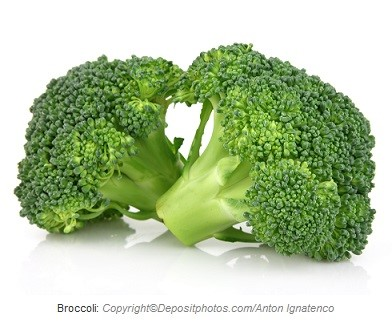 Broccoli. Canadian Academy of Sports Nutrition