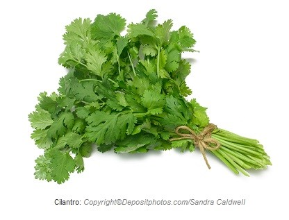 Cilantro. Canadian Academy of Sports Nutrition