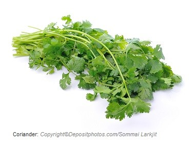 Coriander. Canadian Academy of Sports Nutrition