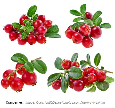 Cranberries. Canadian Academy of Sports Nutrition