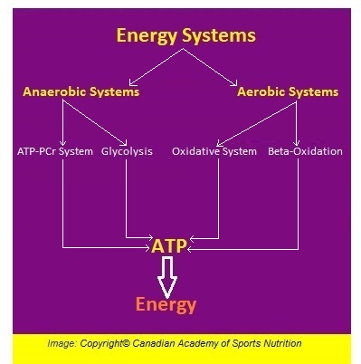 Energy Systems 3 Canadian Academy of Sports Nutrition caasn