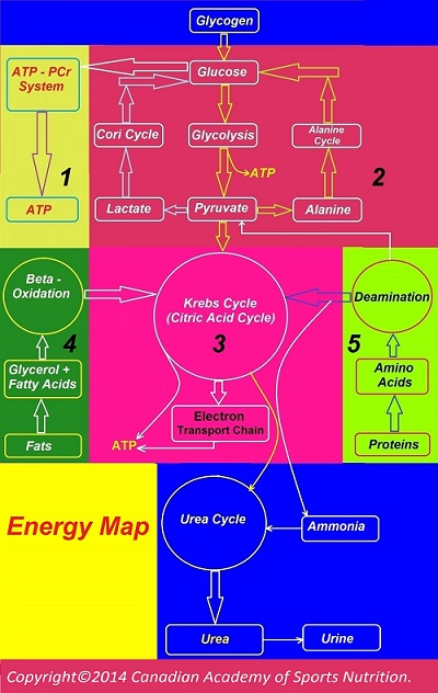 Energy map 3 Canadian Academy of Sports Nutrition caasn