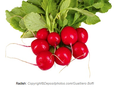 Radish. Canadian Academy of Sports Nutrition