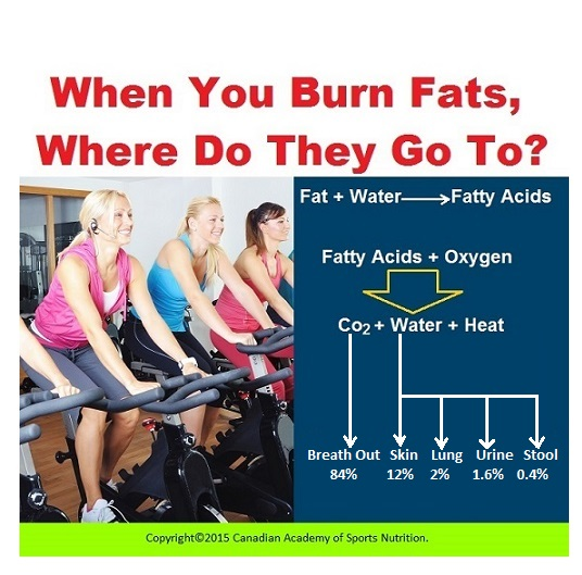 When you burn fats where do they go to 1 Canadian Academy of Sports Nutrition caasn